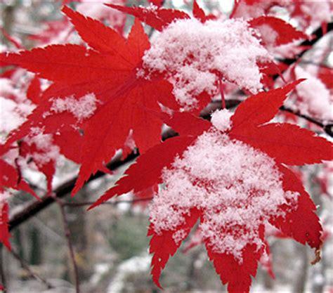 cara membuat efek salju daun bintang berjatuhan di blog tutorial membuat efek salju daun dan bintang berjatuhan di