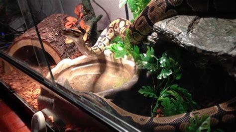 reptiles  aware interact   reptile happy
