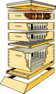 Top Bar Bee Hive Plans Download Top Bar Beehive Plans For Sale Build By Own