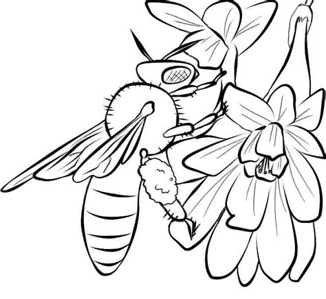 free coloring pages of hive and honey bee