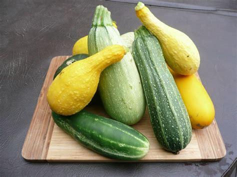 come si possono cucinare le zucchine come cucinare le zucchine in tanti modi diversi e con fantasia