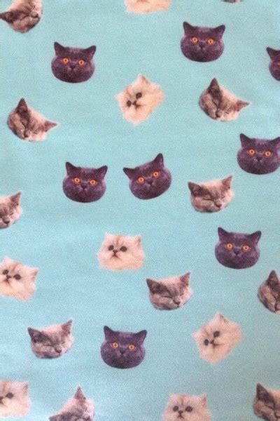 wallpaper tumblr cat cat wallpaper on tumblr