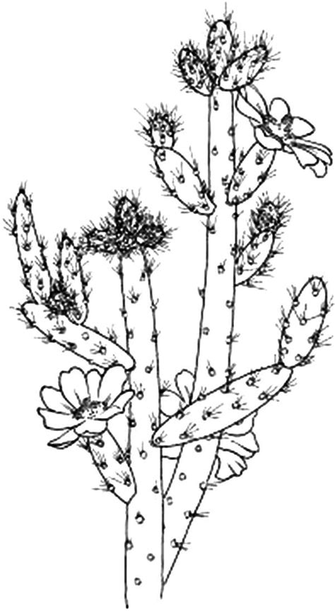 cactus flower coloring page cactus flower coloring pages best place to color