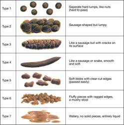 bowel movement colors what does an ideal bowel movement look like brown hairs