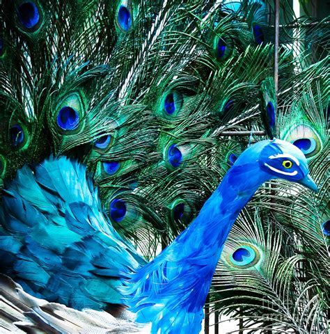 Pretty As A Peacock by Pretty As A Peacock Photograph By Colleen Kammerer