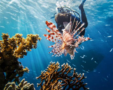 best dive spots in the world the most beautiful scuba diving spots in the world