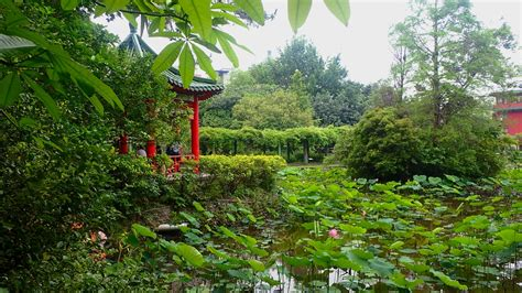 Taipei Botanical Garden One Month In Taipei Take A Walk On The Side