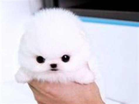 cutest puppies in the whole world 1629ebd6fd4ddae422611b7c888d1b6d jpg