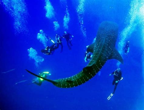 dive belize caribbean scuba diving snorkeling vacations from