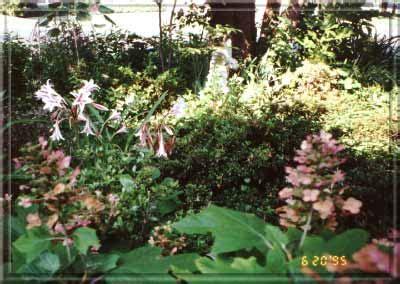 Gueros Oak Garden by Garden Oak Bed Summer