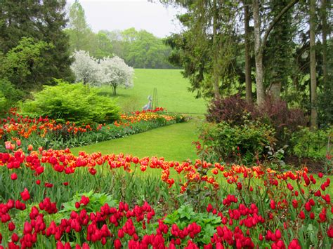 tulip festival pashley manor gardens