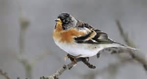 comptage des oiseaux de jardin le de pjh