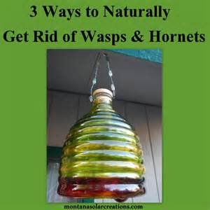 getting rid of wasps and hornets naturally