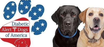diabetes service dogs best diabetes service dogs by diabetic alert dogs of america