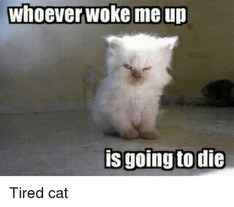 Tired Cat Meme - tired cat memes www pixshark com images galleries with
