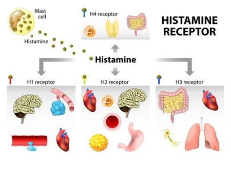 neuropeptide y supplement how to treat histamine intolerance foods high in