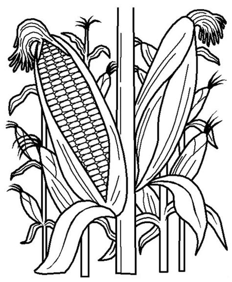 corn stalk template fruits and vegetables cornstalk in the corn field