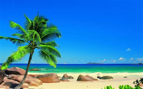sand landscapes ocean sea palm trees sky tropical