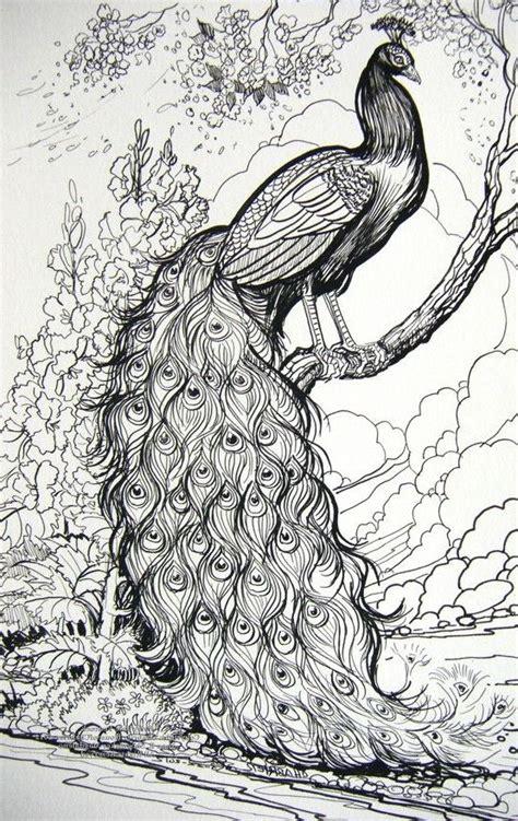 imagenes para dibujar reales dibujos de pavos reales 187 pavorealpedia