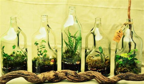 Green Vases And Bowls Gardens Enclosed In Glass Here S How You Can Make Your