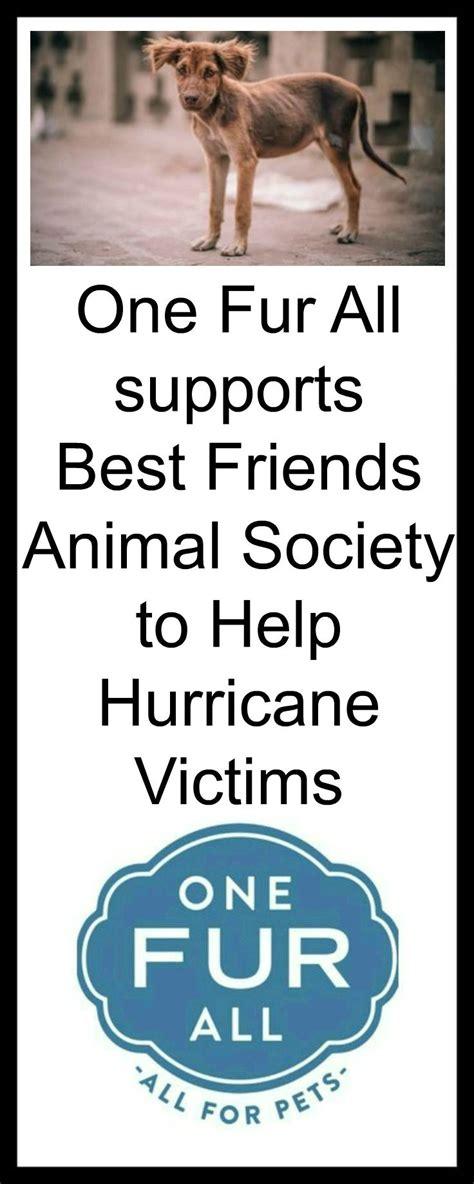 best friends animal society hurricane harvey animal rescue best friends animal society