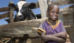 Heifer International All New Heifer Org Shows Path To Power Poverty The