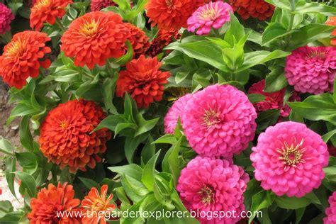 the garden explorer plants for late summer color