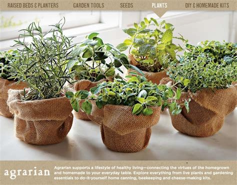 herb garden gift ideas 17 best images about herbal gifts on