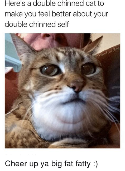 Cheer Up Cat Meme - here s a double chinned cat to make you feel better about