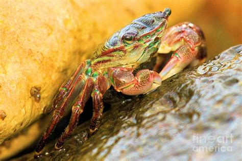 rainbow crab colors photograph by adam jewell