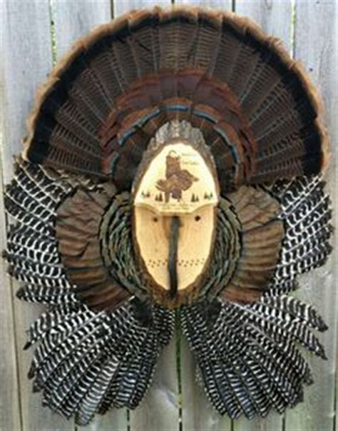 turkey fan mount template different types of taxidermy plaques for mounts