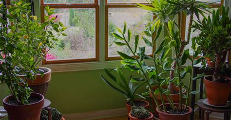 in house plant 9 houseplants that clean the air and are nearly impossible