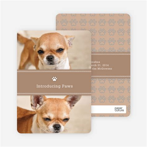 puppy cards pet cards paper culture