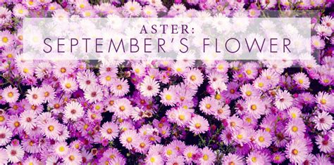 september birthdays the aster sapphire griffins
