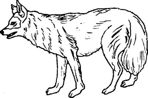 imagenes de animales carnivoros para colorear maestra de infantil animales salvajes para colorear
