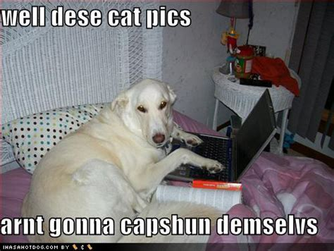 cat pictures captions image gallery lol cats captions pictures