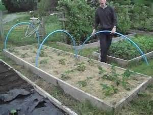 How To Keep Pests Out Of Vegetable Garden - how to quickly protect strawberries from birds youtube