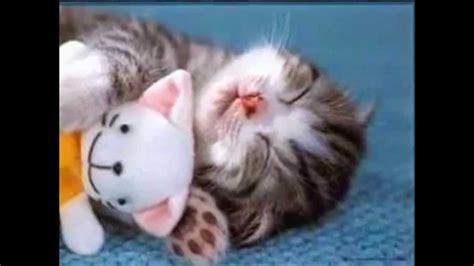 imagenes de amor tierno fotos de gatitos tiernos youtube