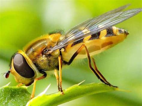 animali volanti come respirano gli insetti
