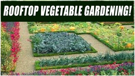 how to make a rooftop vegetable garden