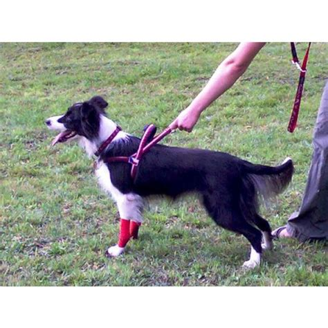 how to your for flyball flyball trekking and sports harness