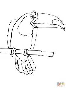 toucan bird coloring free printable coloring pages