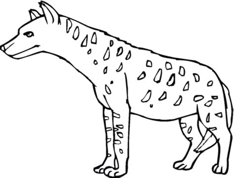 spotted hyena or tiger wolf coloring page supercoloring com