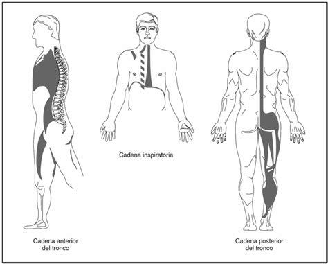 cadenas musculares miembro superior pdf cadenas musculares 191 qu 233 son physioelitesport