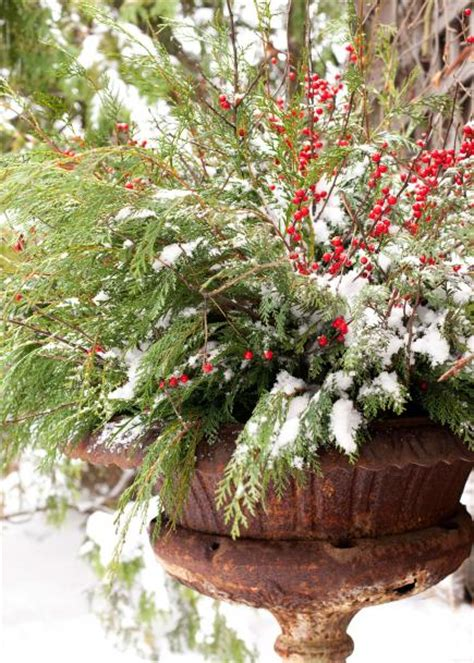 winter container gardens 14 cheerful winter container gardens midwest living