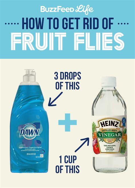 White Vinegar Thc Detox by 17 Best Ideas About Fruit Fly Killer On What