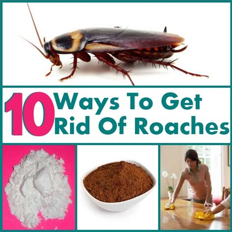 10 ways to simply get rid of roaches diy home things