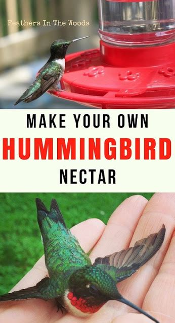 how to make hummingbird nectar feathers in the woods