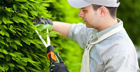 imagenes graciosas de jardineros encuentra los mejores jardineros en bilbao