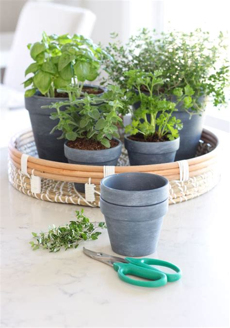 put  small plant pots      images